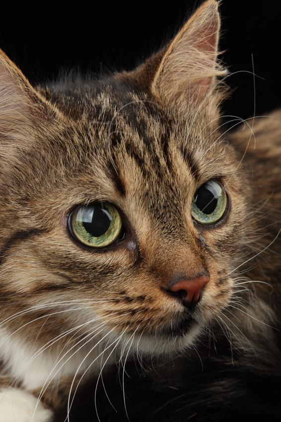 Как вывести с дивана запах кошачьей мочи