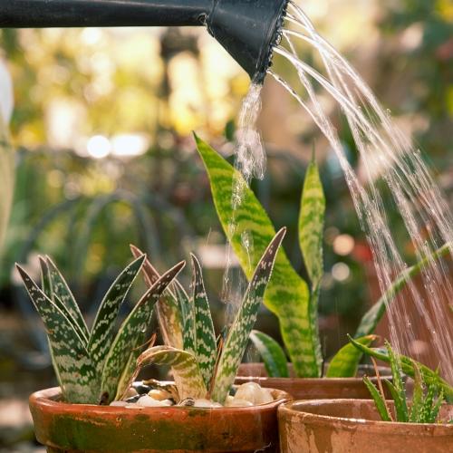 Как подкармливать комнатные растения