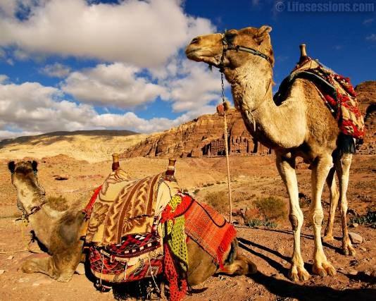 Как использовать верблюда для защиты от песчаной бури