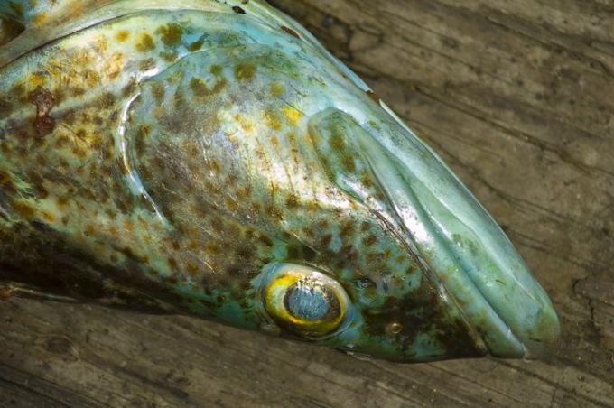 Как приготовить рыбное заливное