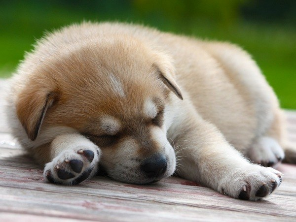 повысить иммунитет собаки