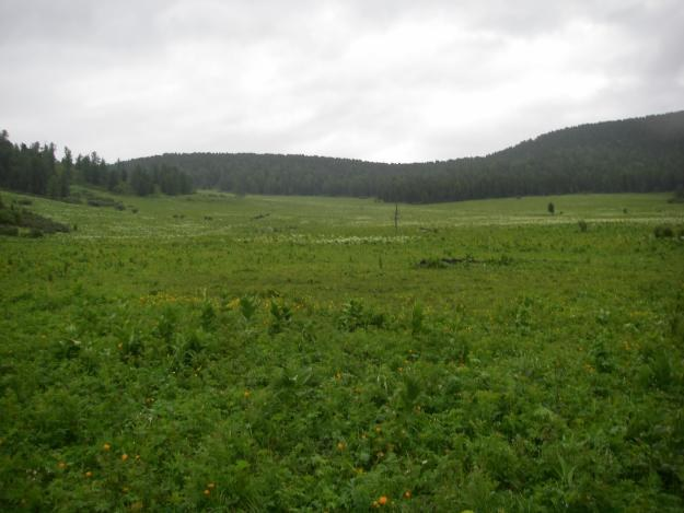 Как оформить паевую землю