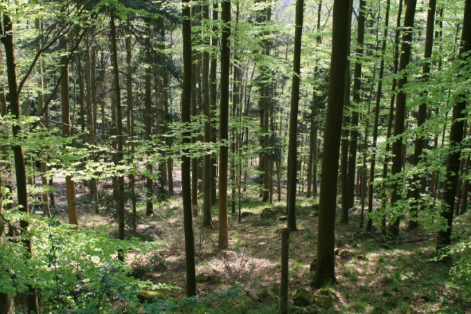 Как добыть пищу в лесу