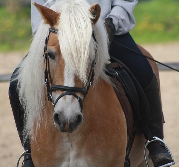 Как научить лошадь ложиться
