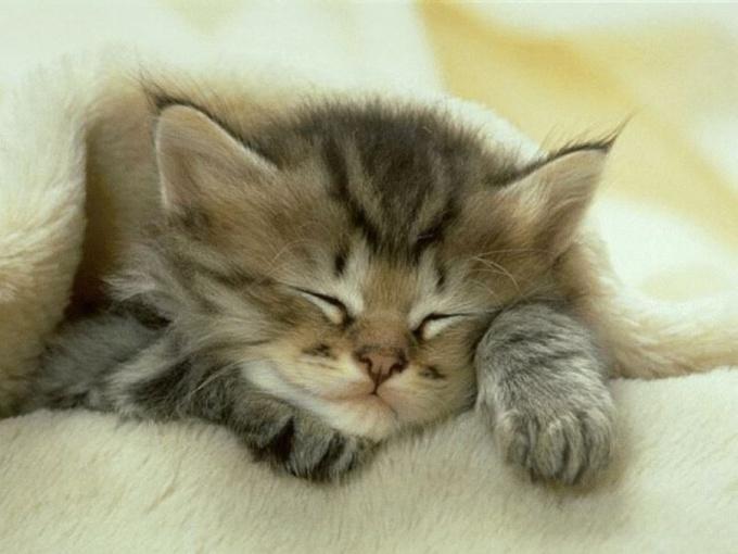 как узнать когда появятся котята
