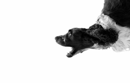 Как отучить собаку гавкать