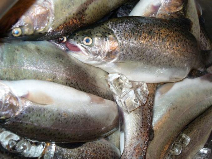 Как определить качество рыбы