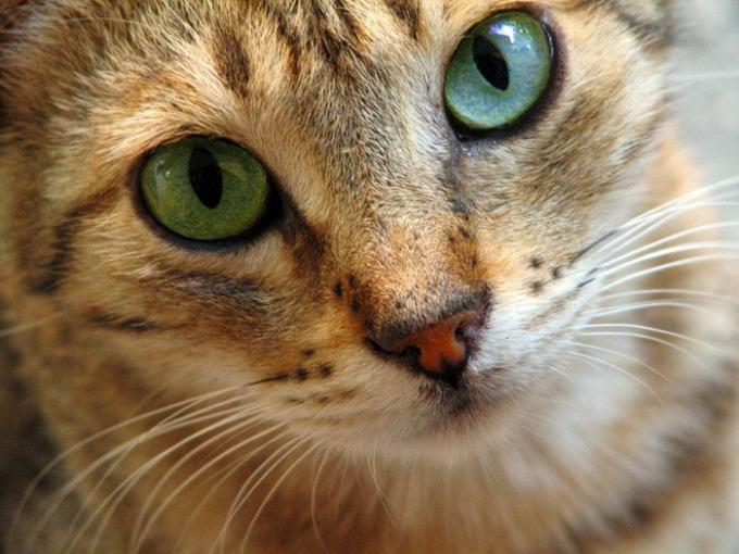 Как кормить и ухаживать за кошками