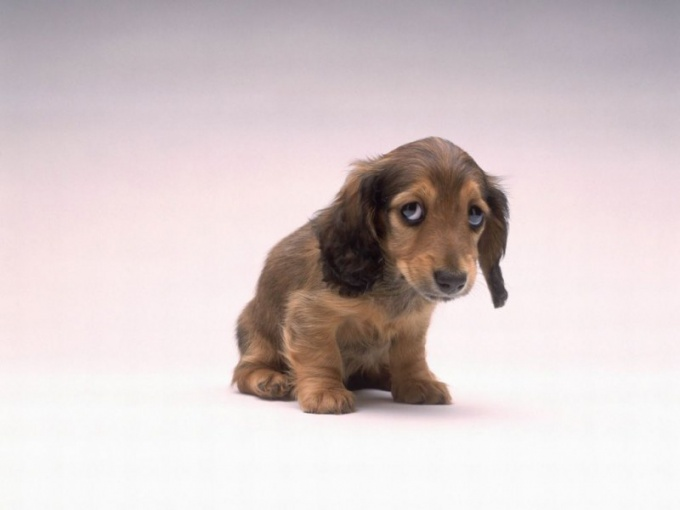 How to treat diarrhea in puppies