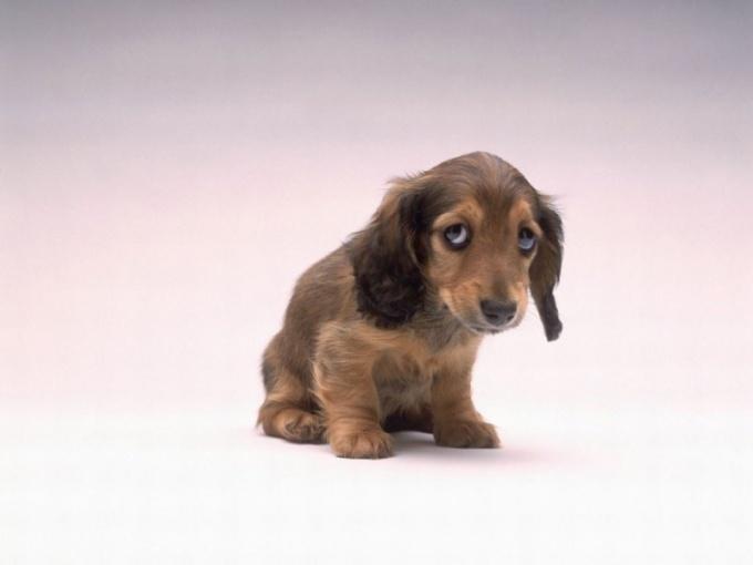 как кормить щенка при поносе
