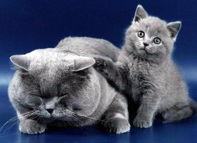 Как дать кошке витамины