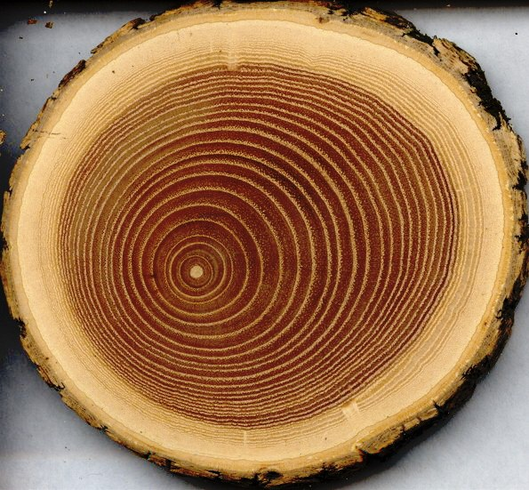 How to determine the type of wood