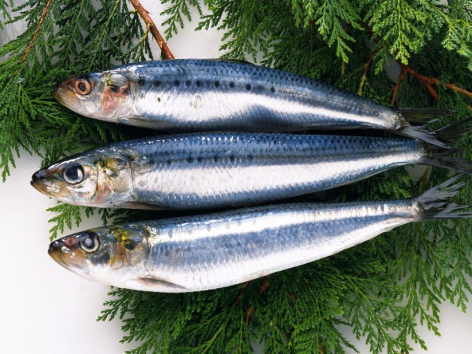 How to keep herring