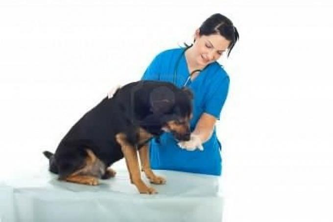 как принимать таблетки собакам