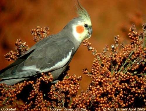 почему у попугая закрыты глаза