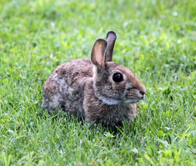как кормить домашнего кролика