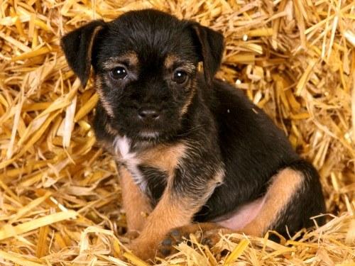 прогнать глистов у собаки во время беременности
