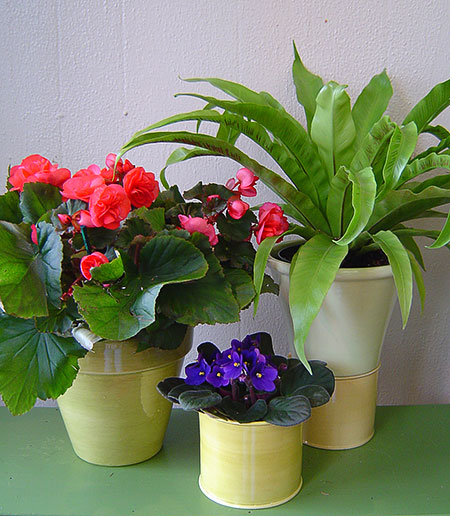 Как спасти замерзшие цветы