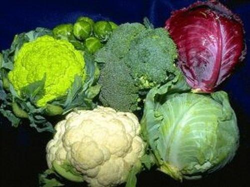 Как беречь капусту в холодильнике
