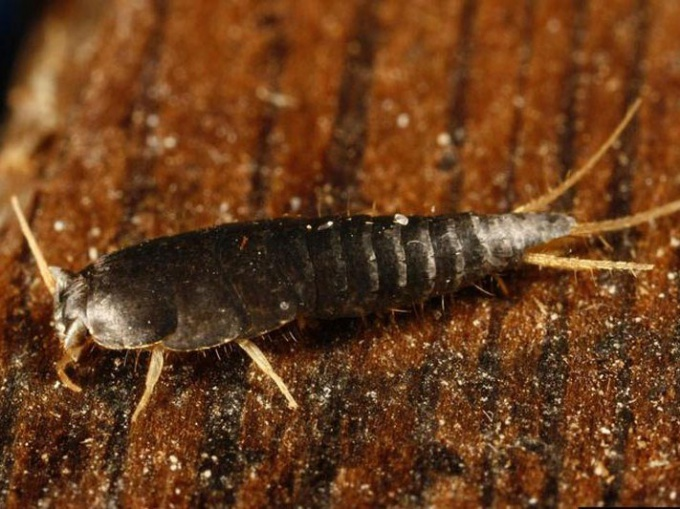 How you get rid of silverfish