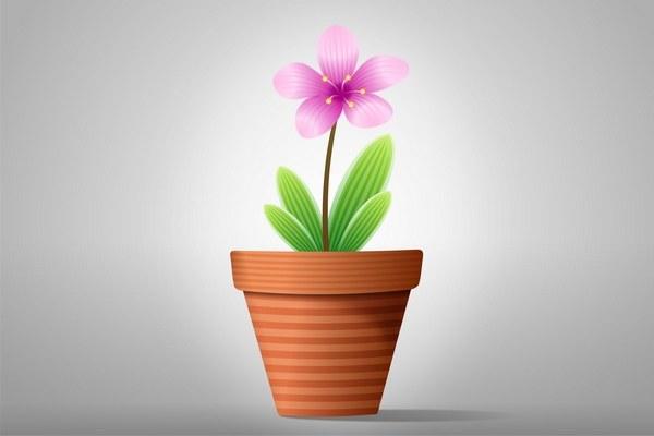 Как украсить квартиру цветами