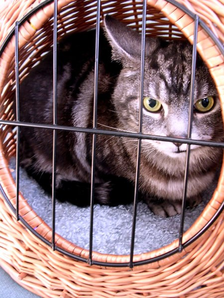 как правильно колоть внутримышечные уколы котам