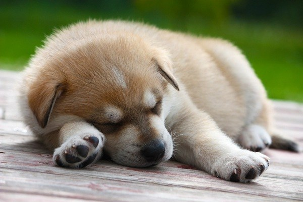 How to teach your puppy to sleep at night