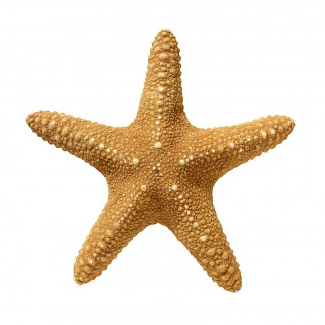 Как нарисовать морскую звезду
