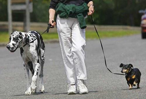 Как примирить собак