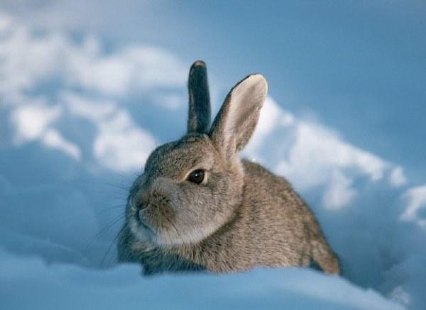 поилка для кроликов с подогревом своими руками