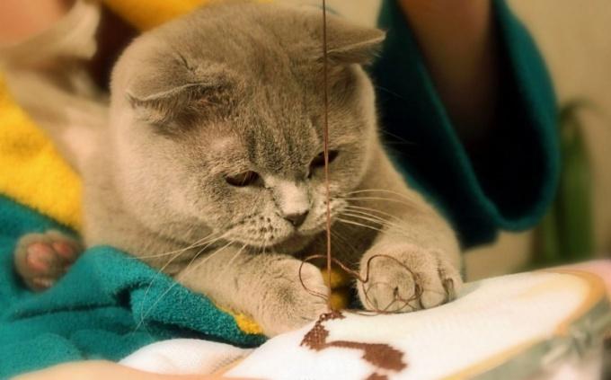 как надевать шлейку на кота