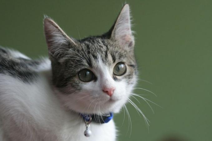 Как научить кошку ходить в лоток