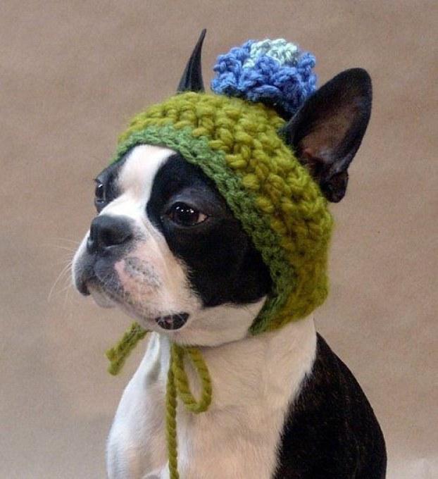 Как сшить шапку для собаки