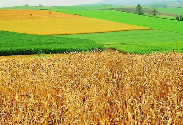 Как оформить землю сельхозназначения