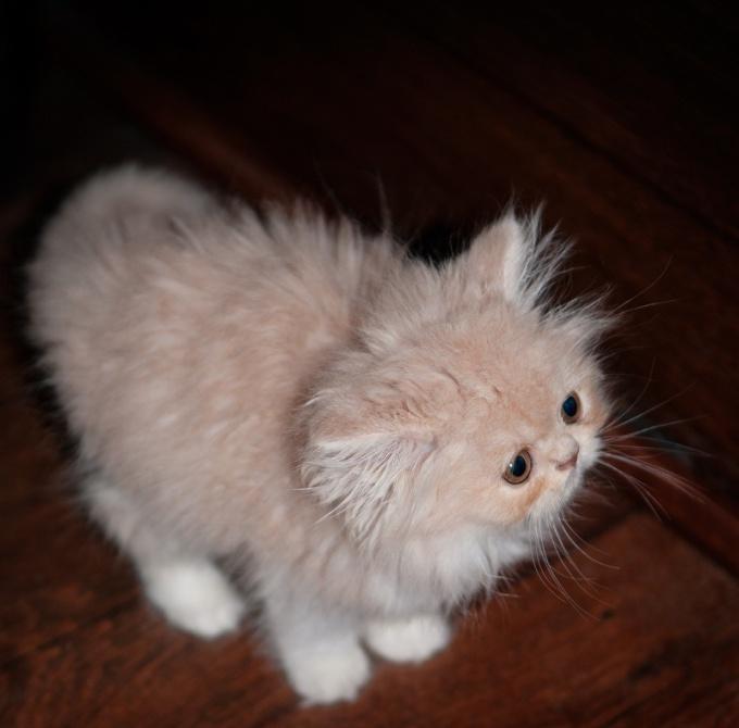 котенок как воспитать