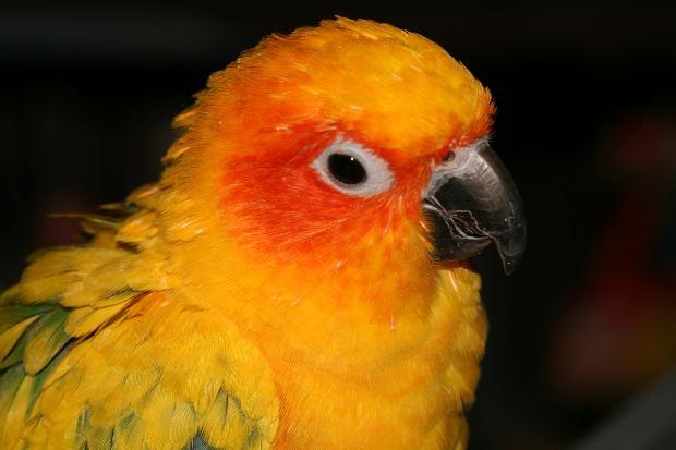 Как обучить попугая говорению
