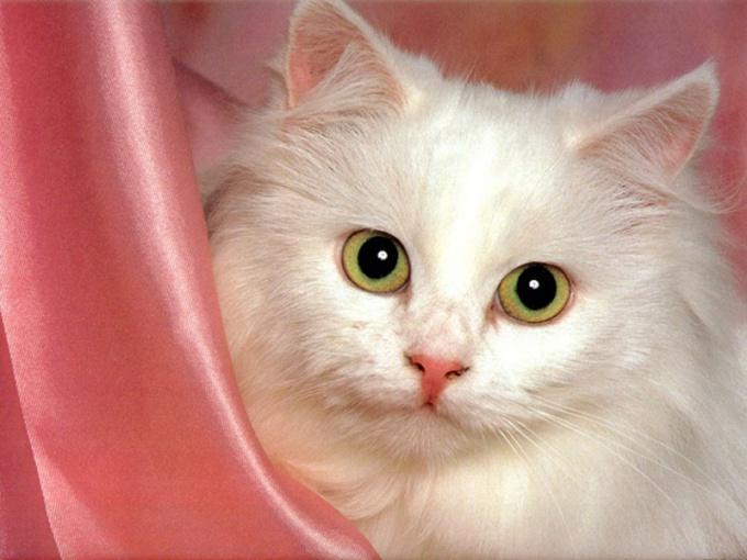 кот вазелиновое маасло
