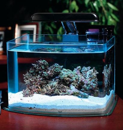 Как измерить жесткость воды в аквариуме