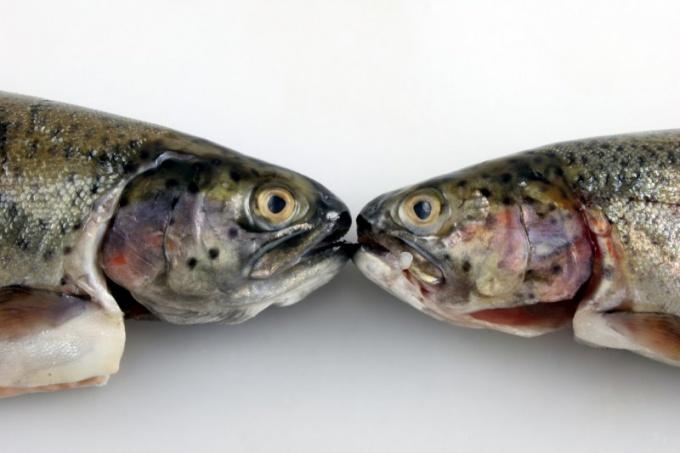 Как снять шкуру с рыбы