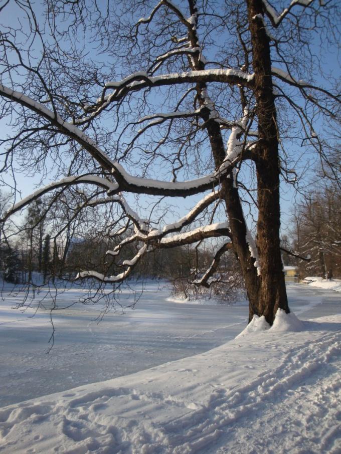 Как научиться рисовать зиму