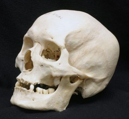 Как слепить череп