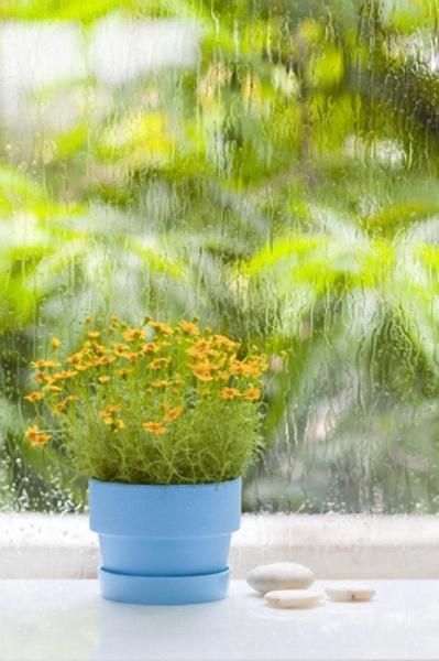 Как выбрать комнатные растения