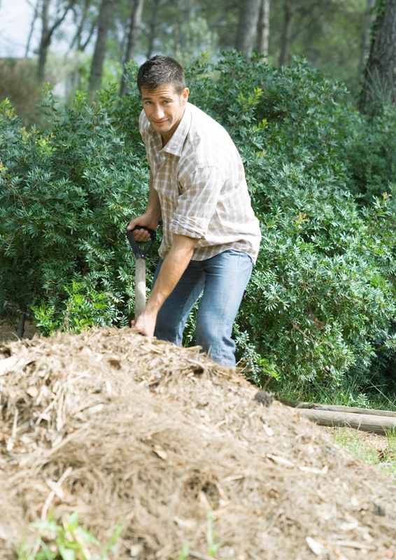 How to fertilize with manure