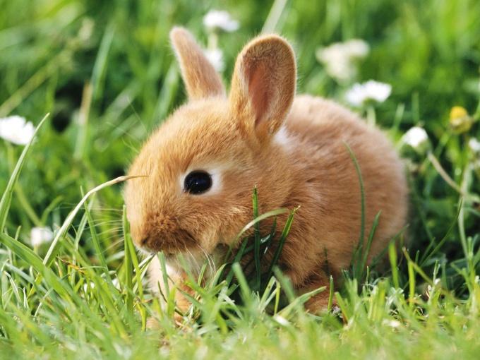 Как кормить маленьких кроликов