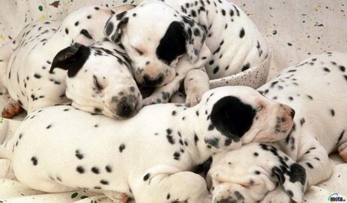 как приучить щенка есть сухой корм