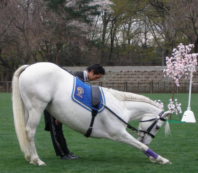 как научить лошадь делать поклон