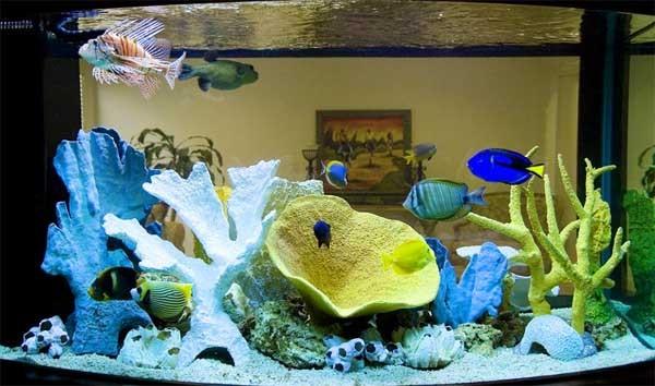 приспособление для охлаждения аквариумов