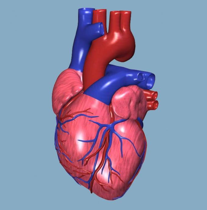 Как снять сердцебиение