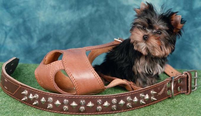 как подобрать спецснаряжение для собаки