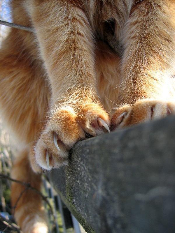 Как отучить кота царапать